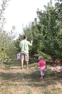 Apple Picking in the Orchard