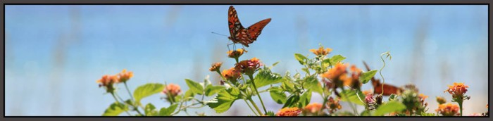 wordpress-header-butterfly-stroked.jpg