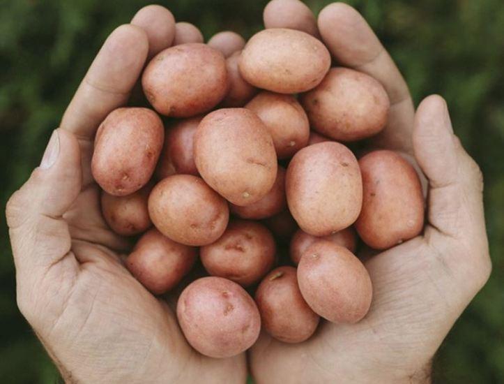 creamer potato