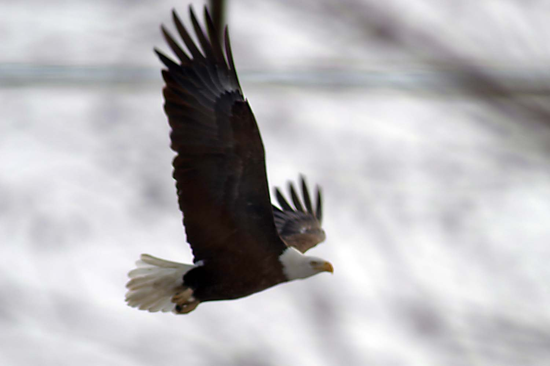 Mondays–Vol. 2 Episode 7–Eagle Watching