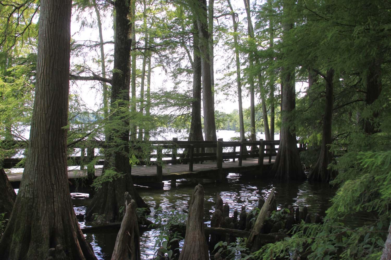 Mondays V2E25–Reelfoot Lake, Tennessee